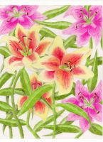 Tiger Lilies by jesus-at-art