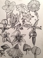 Flower Study by HFoeh