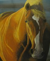 'Horse lit' by tatopainting