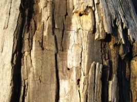 Texture - wood 3 by SanStock