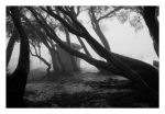 Fog in the Trees I by Sostopher