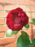Old Red Rose 2 Painterly by ChristopherinMexico