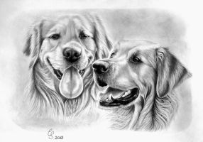 golden retriever by Vitadog