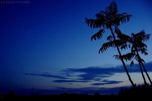 Almost like palm trees by rosaarvensis