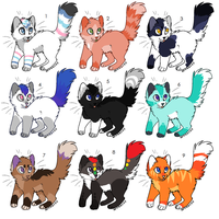 Cat point Adopts by Kainaa