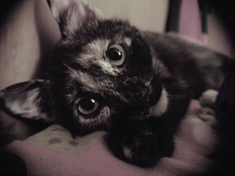 zoey the kitten by nastysauceohyes