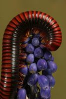millipede 1 by bugalirious-STOCK