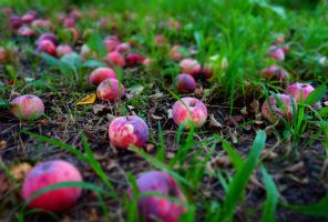 Autumn Apples by Taisa-Winged