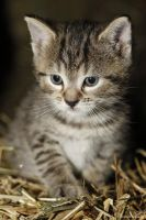 Young kitten by Bastlwastl84