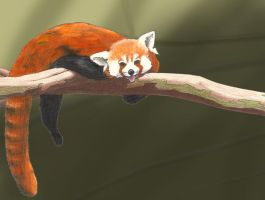 Red Panda Happiness xD by maiaye7