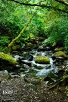 Muckross Creek by otterling
