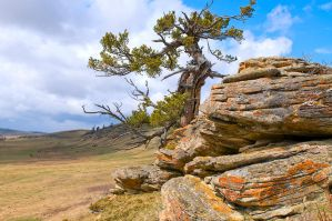 Rocks with tree by MoCity