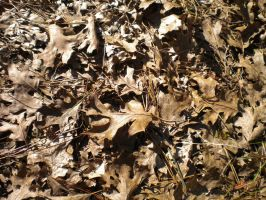 Texture: Dead Leaves 1 by Stock-By-Crystal