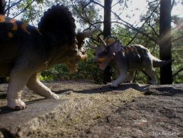 Triceratops Battle by Carnosaur