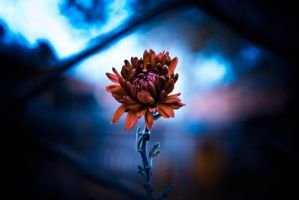 Autumn flower by propan3
