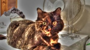 HDR Little Cat by simpspin