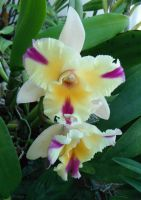 Another Orchid Picture 052012 2 by Amazinadrielle