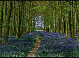 The Bluebell Forest by scuroluce