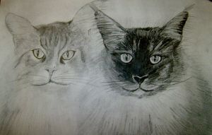 Maincoons Paul and Willy by Mella68