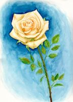 A Rose for a Day by bloominglove
