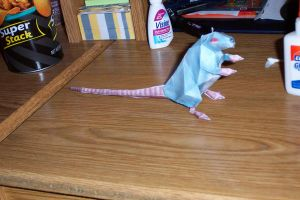 Papercraft Rat by CalleStar