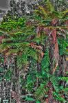 NZ Fern V by Mikelyjohnsono