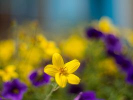 Flower Bokeh by TheSneakyMuffin