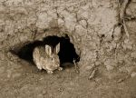 Hare in the Hole by TricksyWeasel