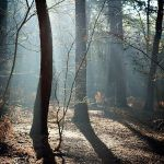 Forest Detail by Mohain