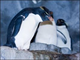 penguin7 by redbeard31