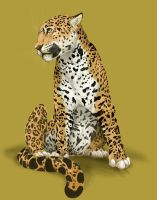 Leopard Coloured by Teggy