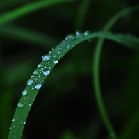 Water Droplets on the Grass by TheMetronomad