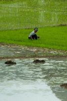 Cleaning of the rice field by REcreates