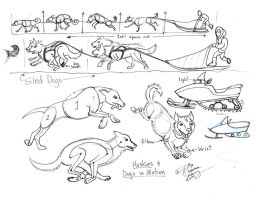 Draw sled dogs and a Snowmobile by Diana-Huang