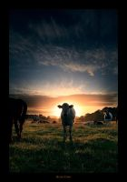 Holy Cow by geckokid