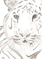 White tiger by mlodahl