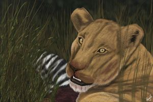 African Lioness by mannafig