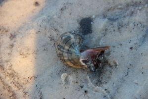Snail by MOTHERHONKINMIRACLES