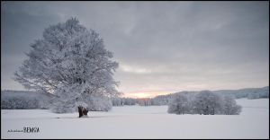 Aubrac, winter 2010, '1' by benisa