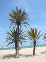 palms in paradise by conelmundo