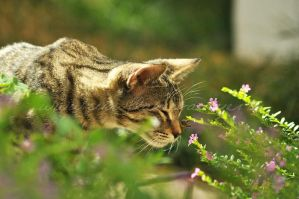 cat and bee by Pebels