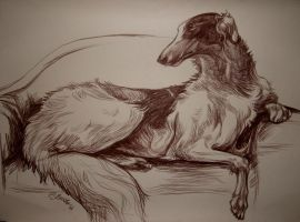 A seated borzoi by Lilithka