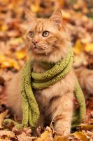 Puddy Cat in a Scarf by kilkennycat