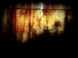 vines on the wall by LBBPhotography