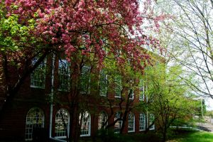 Campus Blooming by WestSideofMidnight