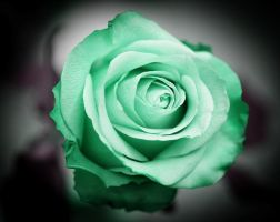 Minty Rose by imonline