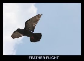 Feather Flight by Melee-pic