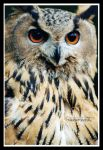eagle owl by declaudi