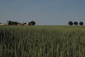 Countryside by TassiloH