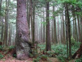 Ecola Forest 4 by FoxStox